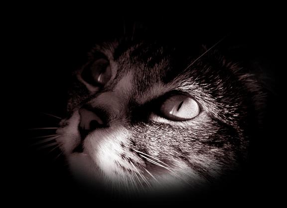 Магические свойства кошек